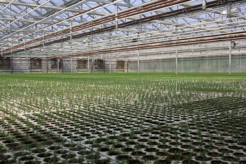 pineland greenhouse filled with seedlings