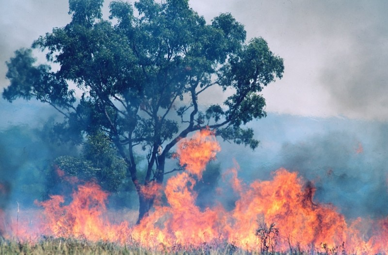 Burning grass encircles a tree in Australia